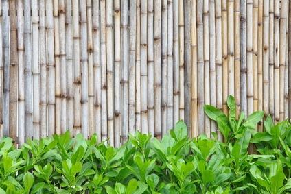 גדרות במבוק לגינה